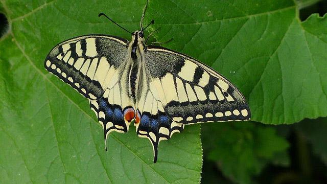 Butterfly at Villa le Barone, Tuscany