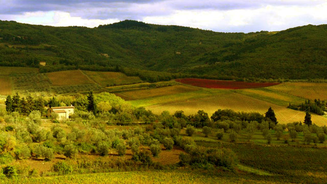Chianti landscape with canaiolo vine from Villa le Barone