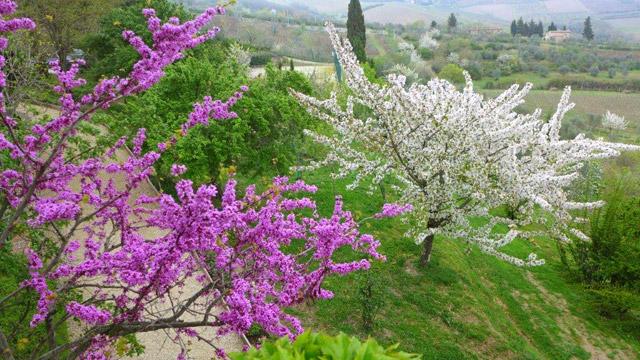 Spring at Hotel Villa le Barone