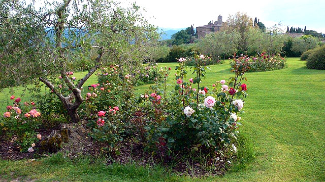 Roses in the gardens of Villa le Barone in Tuscany
