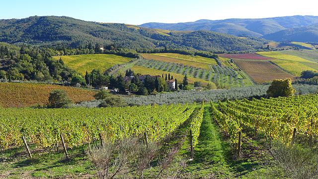 Chianti Classico Vineyards from Villa le Barone Panzano in Chianti