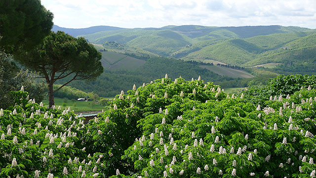 View from the Tower room in spring at Villa le Barone , Chianti