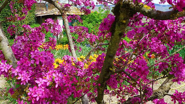 A corner of Villa le Barone's garden in spring
