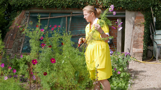 Choosing cosmos for guests in the cutting garden Villa le Barone Chianti